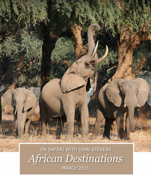 On Safari with John Stevens - African Destinations
