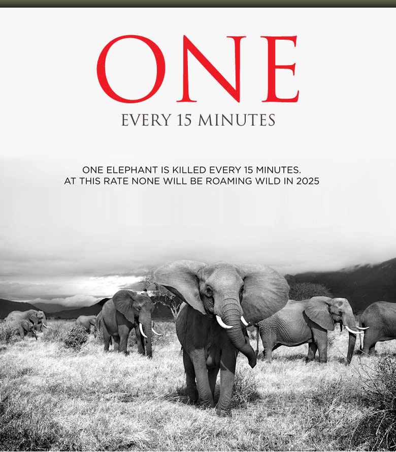 One Elephant is killed every 15 minutes