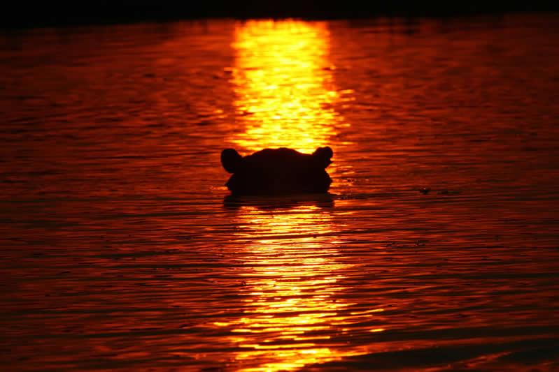 Hippo Silhouette - Selinda Reserve - Botswana - JGS